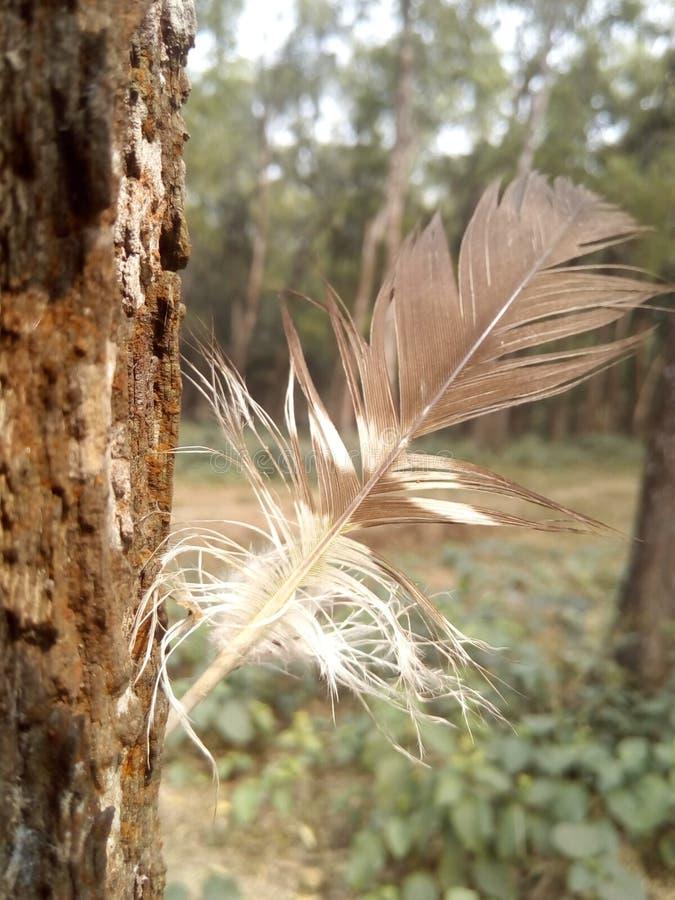 Φωτογραφία φτερών πουλιά στοκ εικόνα με δικαίωμα ελεύθερης χρήσης