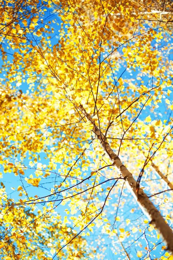 Φωτογραφία Bckground, ήλιος που λάμπει μέσω των δασικών δέντρων στοκ φωτογραφία