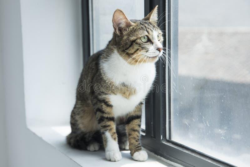 Φωτογραφίες καλές γατών στοκ εικόνες
