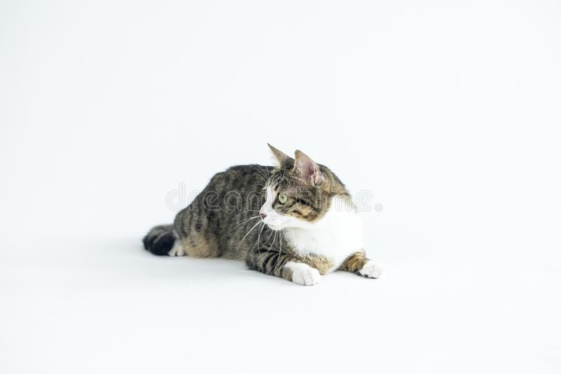 Φωτογραφίες καλές γατών στοκ εικόνες με δικαίωμα ελεύθερης χρήσης