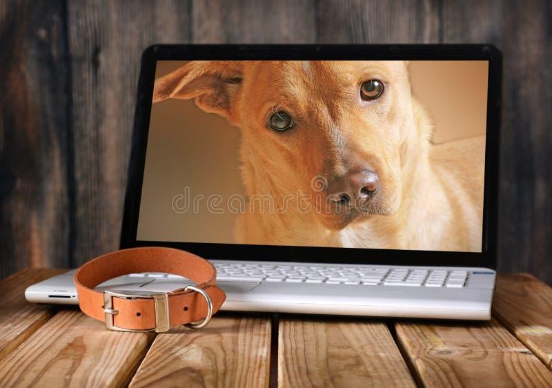 Φωτογραφίες σκυλιών στο όργανο ελέγχου lap-top στοκ εικόνες