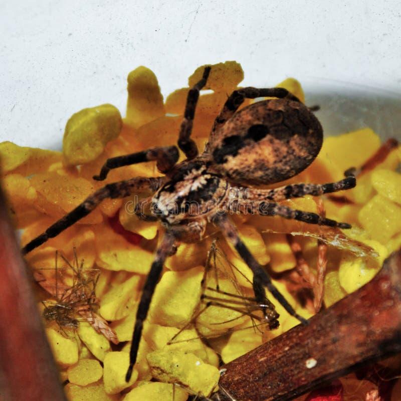 φωτογραφίστε που απεικονίζει μια αράχνη στο πρώτο πλάνο στοκ φωτογραφίες