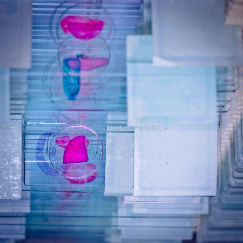 Φωτογραφική διαφάνεια μικροσκοπίων επιστήμης στοκ εικόνες