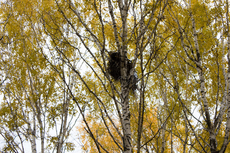 Φωλιά κοράκων στοκ φωτογραφίες