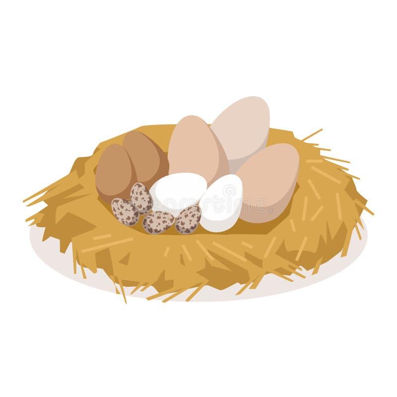 Φωλιά με τα αυγά των διαφορετικών πουλιών, διανυσματική απεικόνιση αναπαραγωγής πουλερικών απεικόνιση αποθεμάτων
