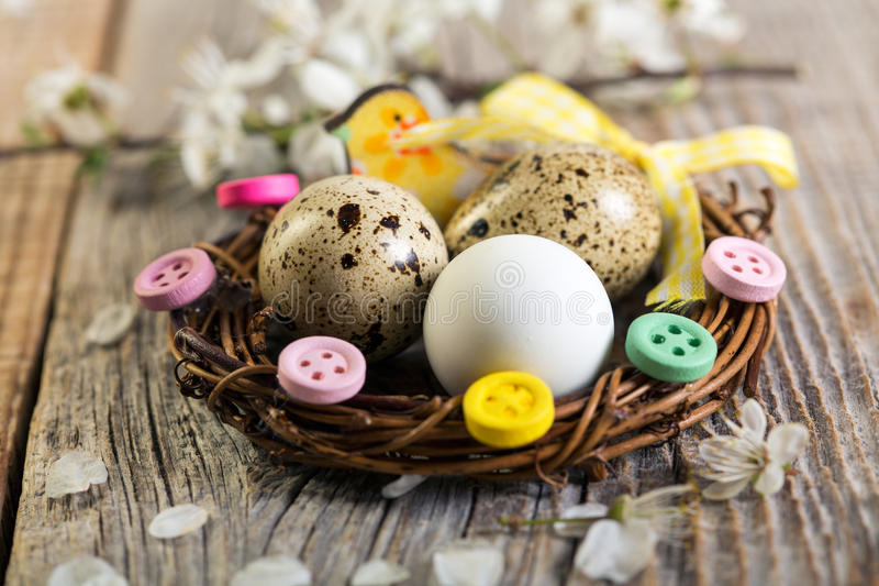 Φωλιά Πάσχας με τα αυγά νησοπέρδικων στοκ εικόνες με δικαίωμα ελεύθερης χρήσης