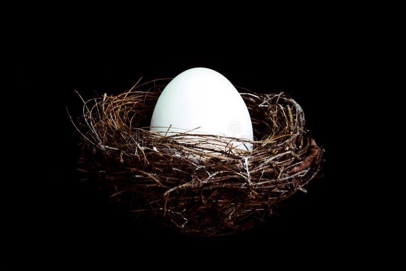 Φωλιά πουλιών με το αυγό στοκ φωτογραφία