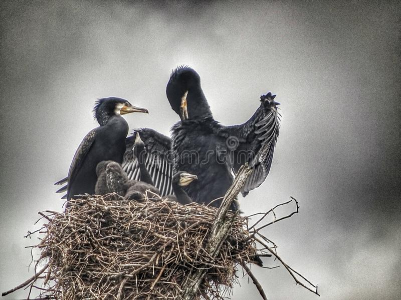 Φωλιά πουλιών στη λίμνη Periyar στο Κεράλα στοκ εικόνα