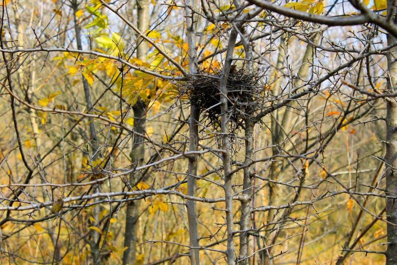 Φωλιά πουλιών στο δάσος φθινοπώρου στοκ εικόνες