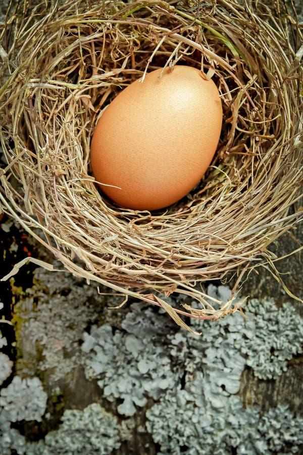 Φωλιά σανού με το καφετί αυγό στοκ εικόνες