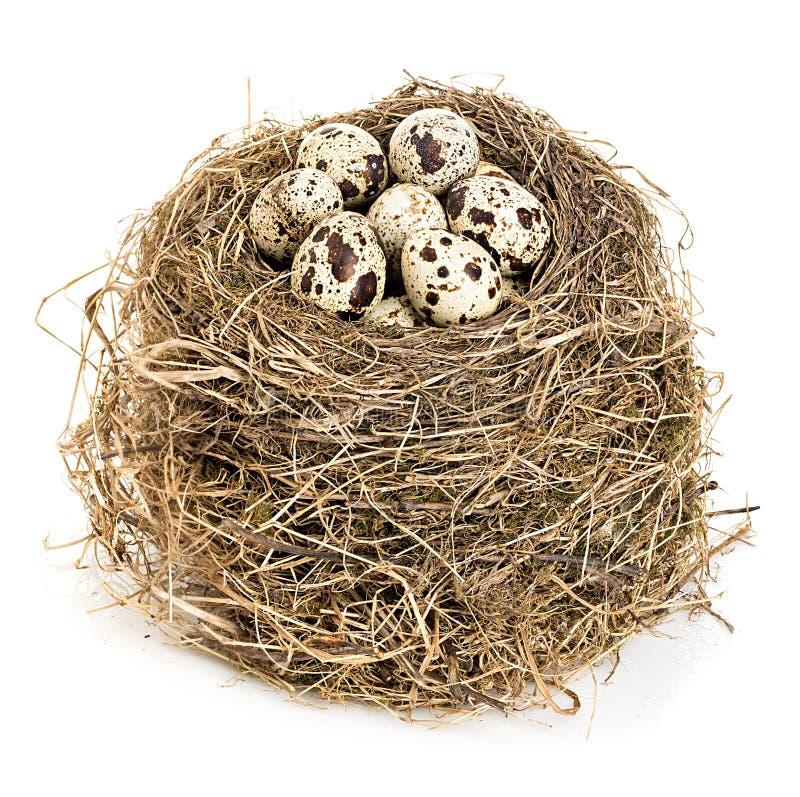 Download Φωλιά του αρχικού πουλιού με την κινηματογράφηση σε πρώτο πλάνο αυγών ορτυκιών που απομονώνεται σε ένα άσπρο υπόβαθρο Στοκ Εικόνα - εικόνα από αυγό, αδελφών: 62702603