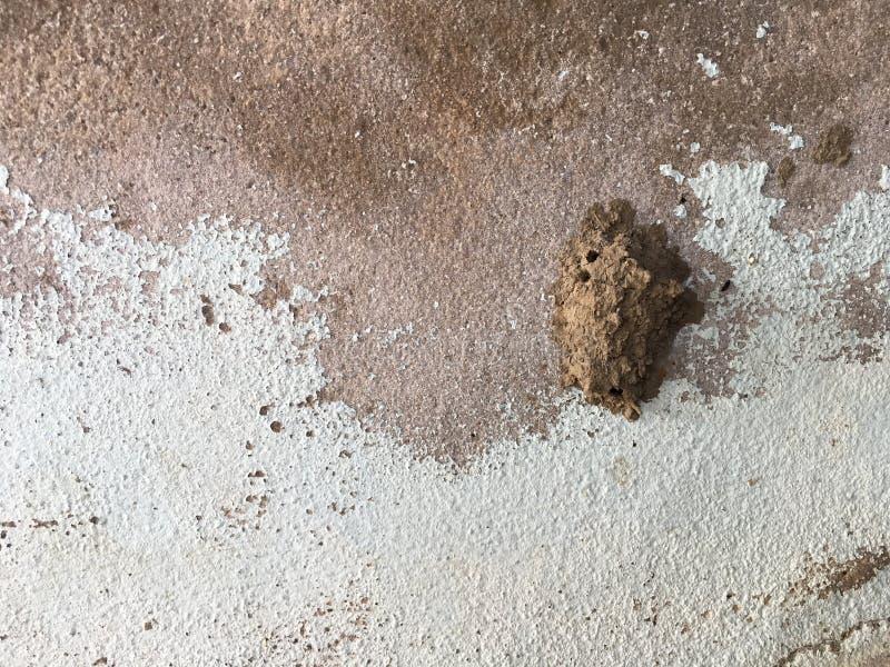 Φωλιές εντόμων στον τοίχο τσιμέντου στοκ εικόνες με δικαίωμα ελεύθερης χρήσης