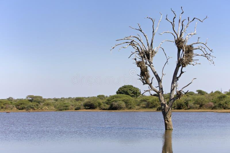 Φωλιές σε ένα δέντρο στοκ φωτογραφία με δικαίωμα ελεύθερης χρήσης