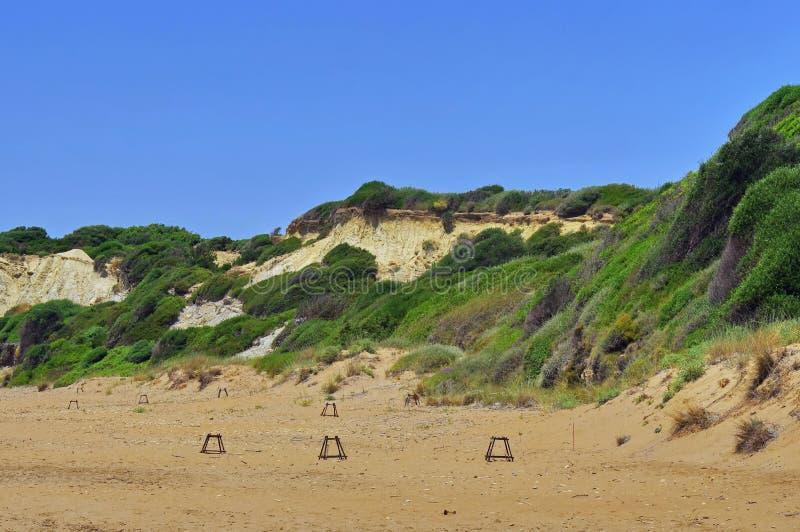 Φωλιές χελωνών θάλασσας ηλιθίων (Caretta Caretta) στοκ φωτογραφίες
