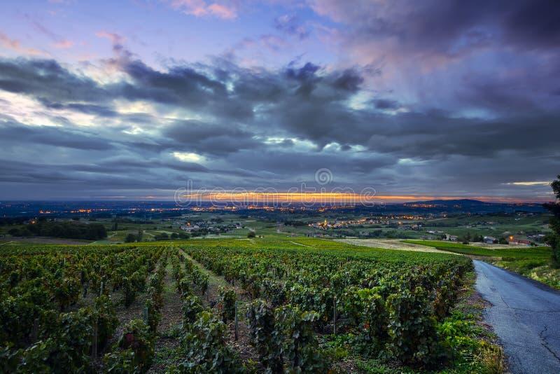 Φω'τα ανατολής πέρα από τους αμπελώνες Beaujolais, Γαλλία στοκ φωτογραφία με δικαίωμα ελεύθερης χρήσης