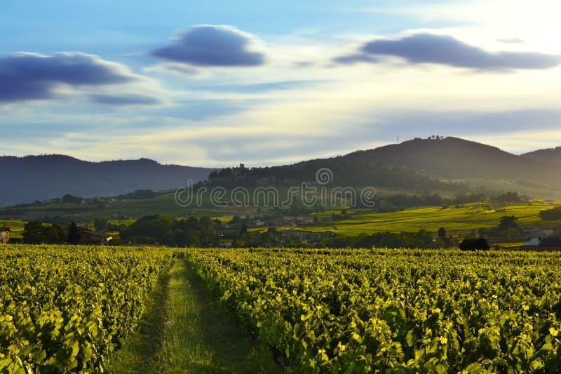 Φω'τα ηλιοβασιλέματος πέρα από τους αμπελώνες και τα βουνά, Beaujolais, Γαλλία στοκ εικόνες