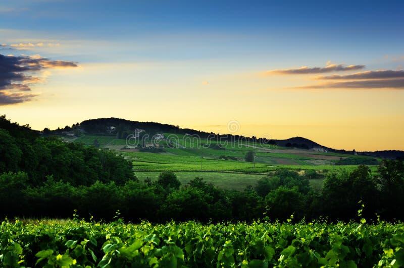 Φω'τα ηλιοβασιλέματος πέρα από το λόφο και τους αμπελώνες Beaujolais του εδάφους, Γαλλία στοκ εικόνες