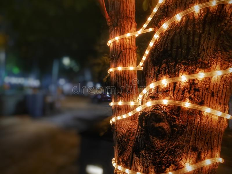 Φω'τα που αγκαλιάζουν το δέντρο στοκ φωτογραφίες με δικαίωμα ελεύθερης χρήσης