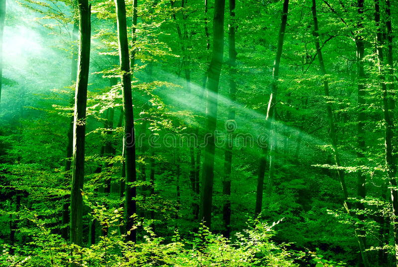 Φω'τα του δάσους στοκ φωτογραφία με δικαίωμα ελεύθερης χρήσης
