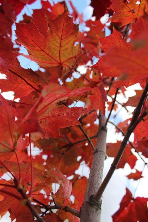 Φω'τα του φθινοπώρου στοκ φωτογραφία με δικαίωμα ελεύθερης χρήσης