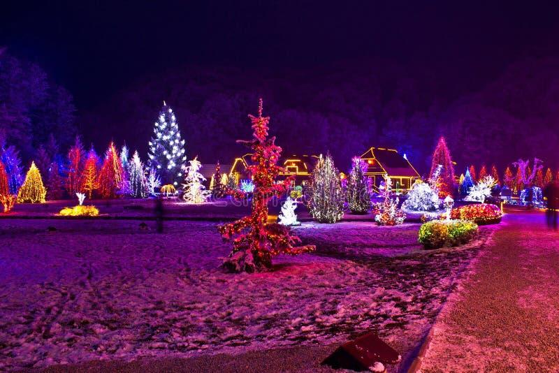 Φω'τα Χριστουγέννων στο πόλης πάρκο - χρώματα φαντασίας στοκ εικόνες