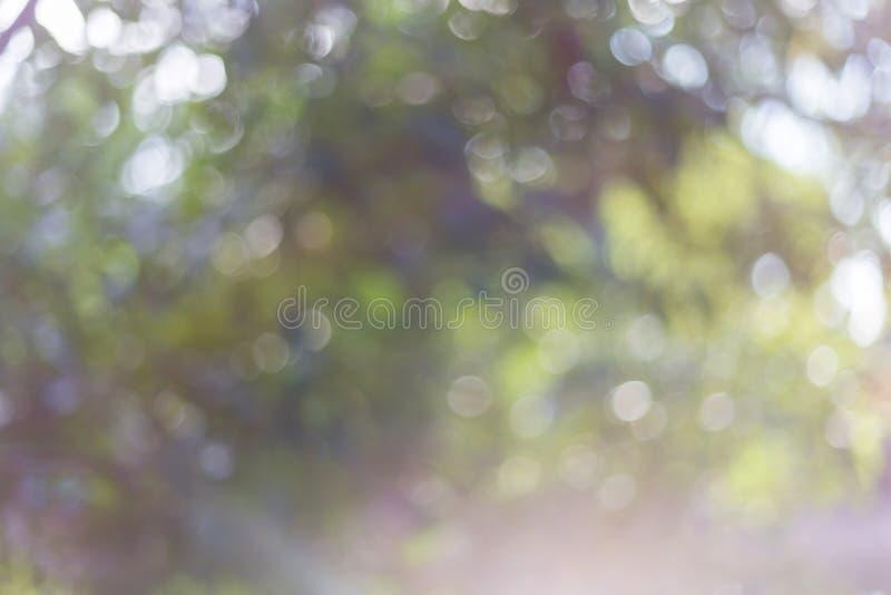 Φω'τα Bokeh μια ηλιόλουστη ημέρα στον κήπο στοκ φωτογραφία