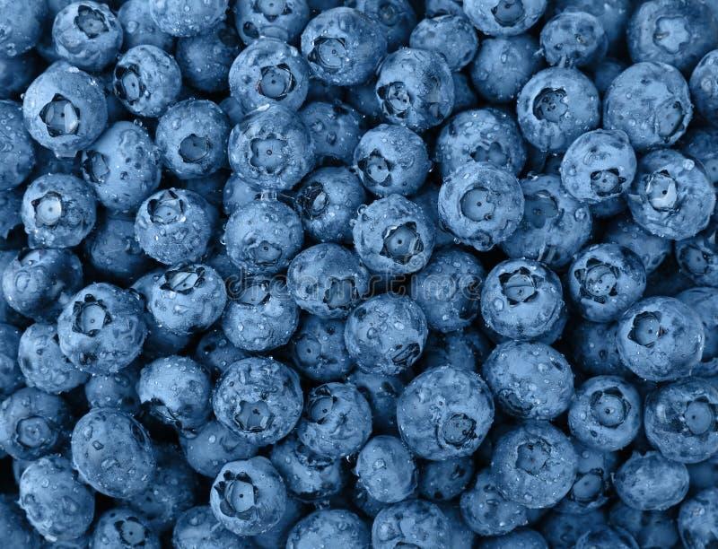 Φόντο των μπλε τόνων νωπών πλυμένων βατόμουρων στοκ εικόνες