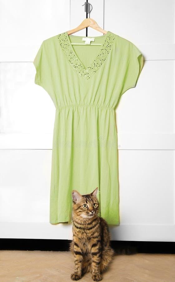 φόρεμα πράσινο Στοκ Εικόνες
