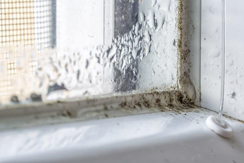 Φόρμα και ρύπος στο παράθυρο στοκ φωτογραφία με δικαίωμα ελεύθερης χρήσης