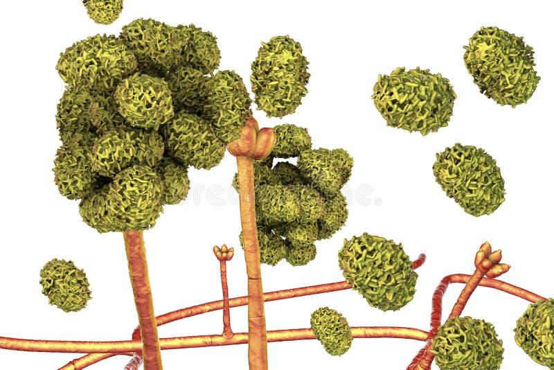 Φόρμα chartarum Stachybotrys διανυσματική απεικόνιση