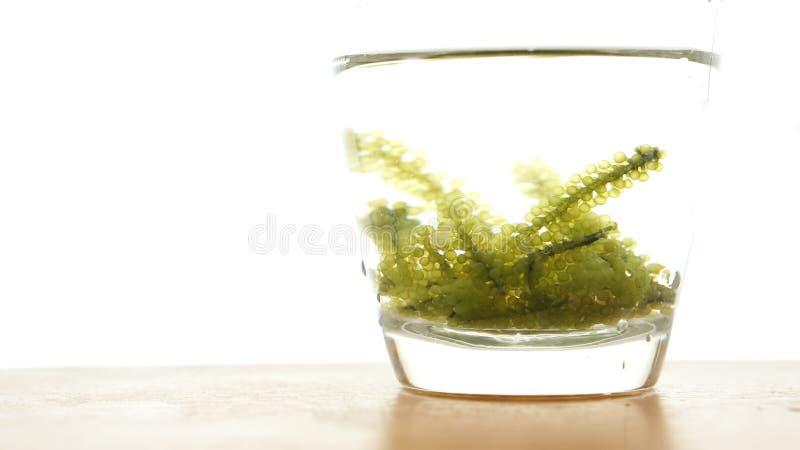Φύκι σταφυλιών θάλασσας, budou uni ιαπωνικά ωκεάνια τρόφιμα φυκιών μεγάλος στοκ εικόνες