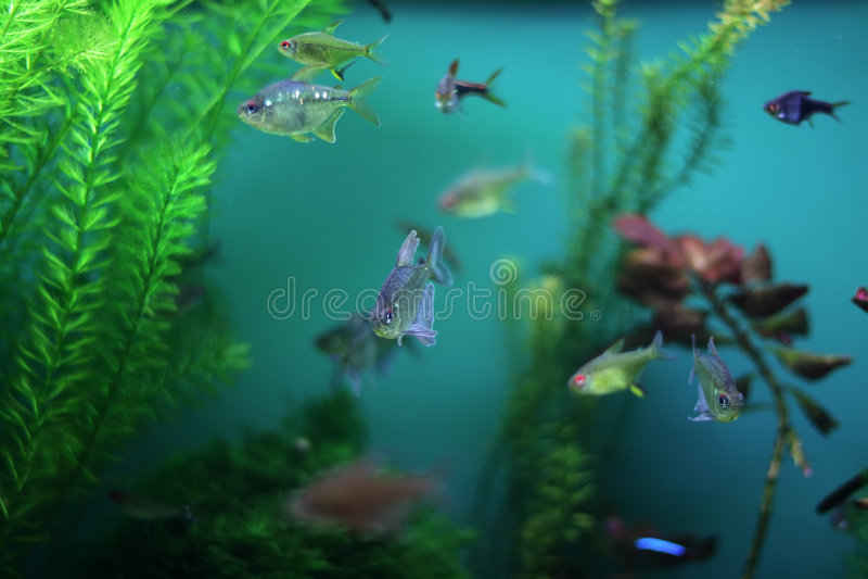 φύκι ψαριών ενυδρείων στοκ εικόνες