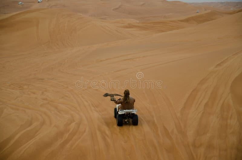 Φύλακας γερακιών που οδηγά στην έρημο του Ντουμπάι στοκ εικόνες με δικαίωμα ελεύθερης χρήσης