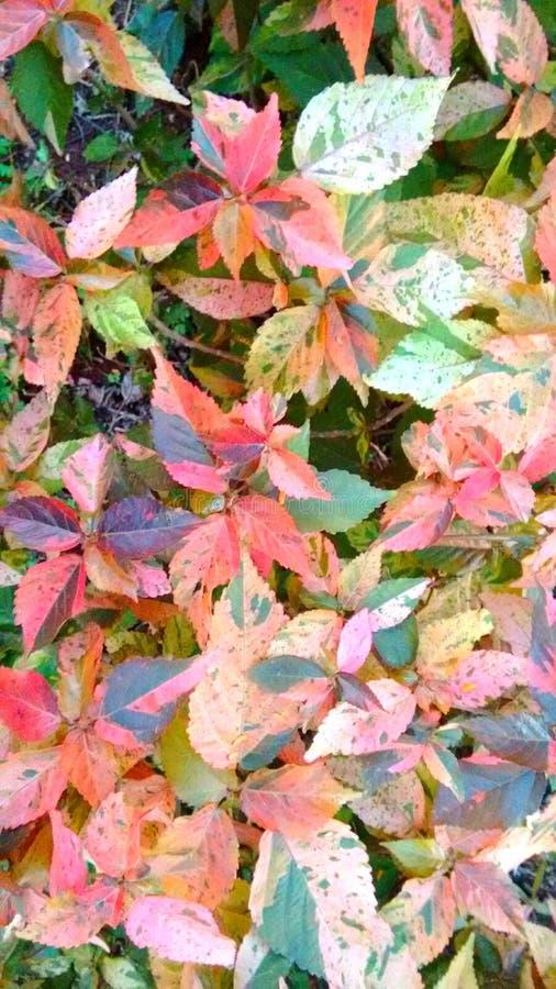 Φύλλα άνοιξη στοκ εικόνα