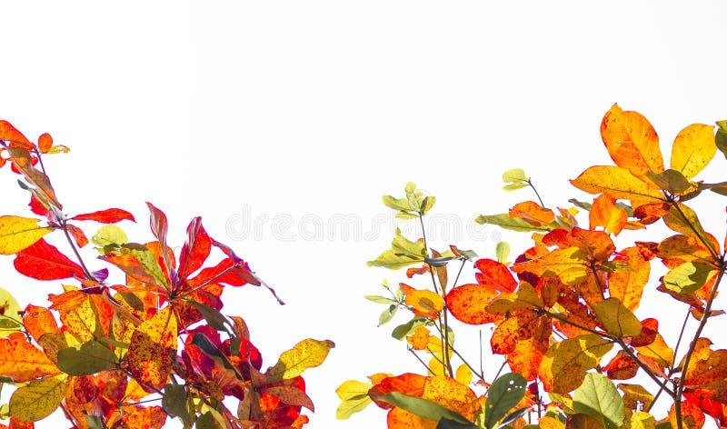 Φύλλα δέντρων για την εικόνα υποβάθρου στοκ εικόνες