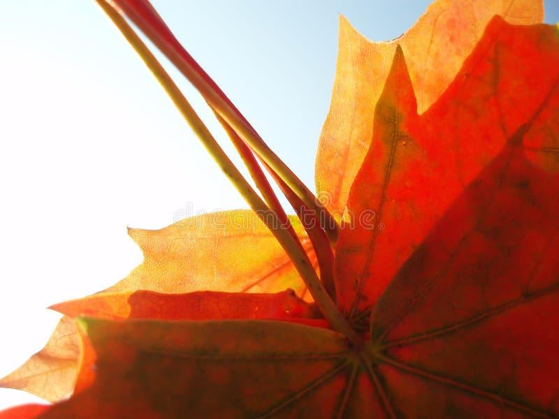 φύλλα δεσμών φθινοπώρου στοκ φωτογραφίες