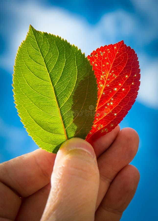 Φύλλα εκμετάλλευσης χεριών στοκ φωτογραφία με δικαίωμα ελεύθερης χρήσης