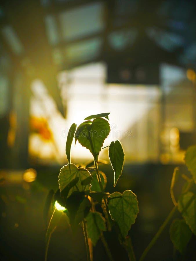 Φύλλα ηλιοβασιλέματος θερμοκηπίων στοκ φωτογραφία με δικαίωμα ελεύθερης χρήσης