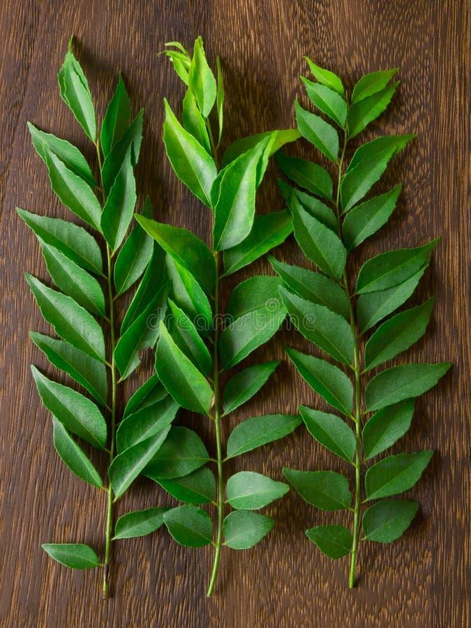 Φύλλα κάρρυ στοκ εικόνα