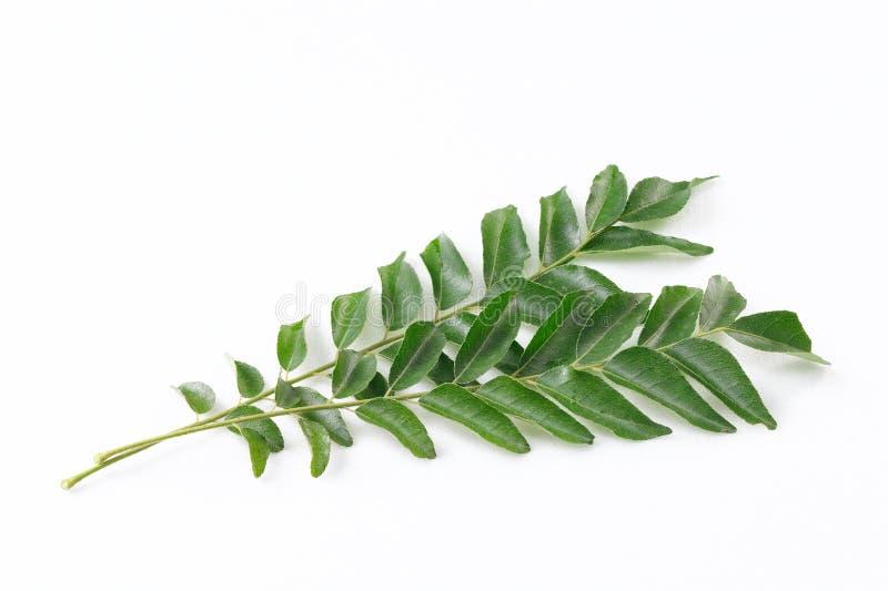 Φύλλα κάρρυ στοκ εικόνες
