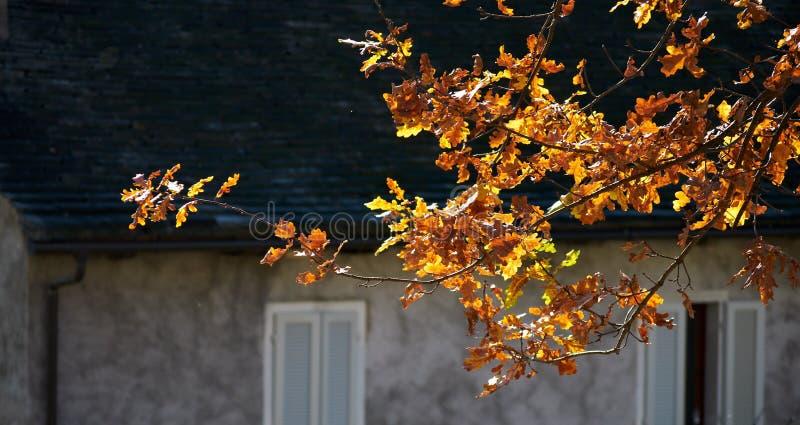 Download φύλλα κίτρινα στοκ εικόνα. εικόνα από φθινοπωρινές, φως - 17056195