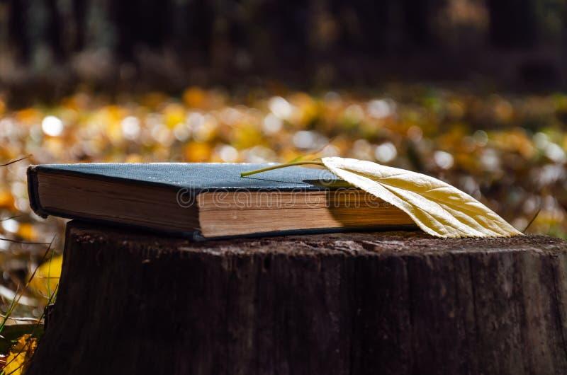Φύλλα και κίτρινα πεσμένα σε κούτσουρο στο φθινοπωρινό δάσος ή πάρκο Κλείσιμο Αργός τρόπος ζωής στοκ φωτογραφία με δικαίωμα ελεύθερης χρήσης