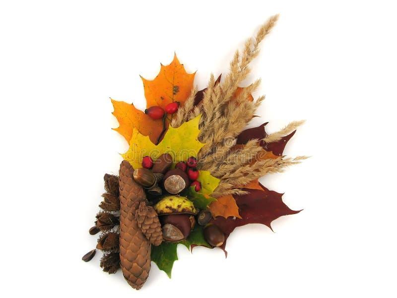 Φύλλα και καρποί του φθινοπώρου στοκ εικόνες