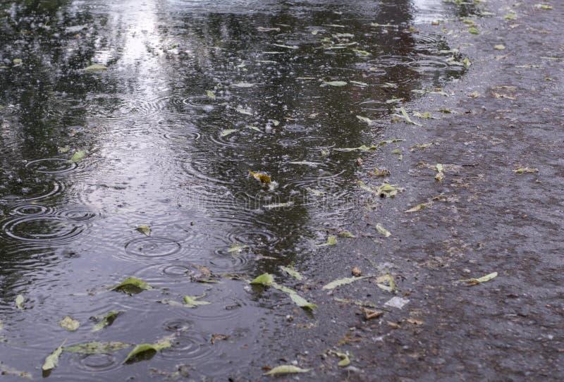 Φύλλα και κυματισμοί στη λακκούβα στη βροχή στο πάρκο E στοκ φωτογραφία
