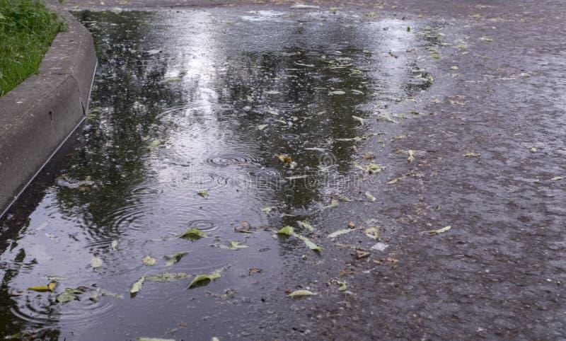 Φύλλα και κυματισμοί στη λακκούβα στη βροχή στο πάρκο E στοκ φωτογραφίες