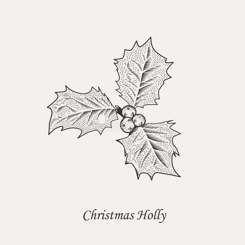 Φύλλα και μούρα της Holly Χριστουγέννων διανυσματική απεικόνιση