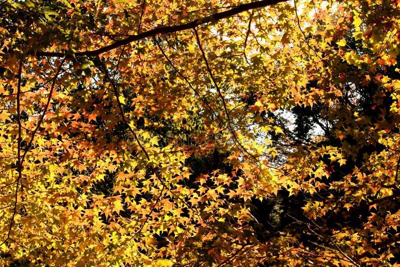 Φύλλα και χρώμα φθινοπώρου κάτω από το φως του ήλιου στοκ φωτογραφία