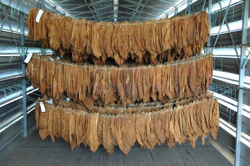 Φύλλα καπνών στοκ φωτογραφίες