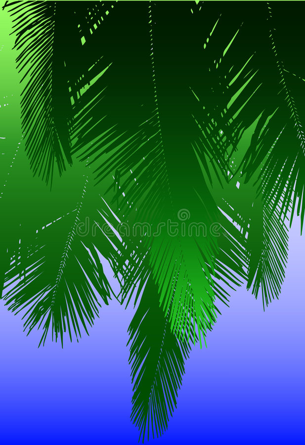φύλλα καρύδων διανυσματική απεικόνιση