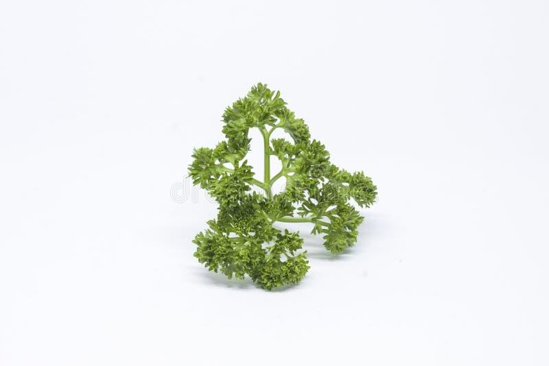 Φύλλα κορίανδρου για να είναι συστατικά τροφίμων στοκ εικόνα